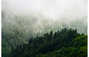 Фотообои Далекий лес в тумане