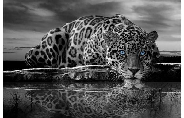 Фотообои Черно-белый гепард